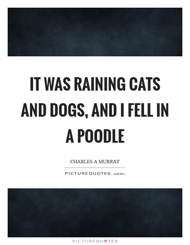 It was raining cats and dogs, and I fell in a poodle Picture Quote #1