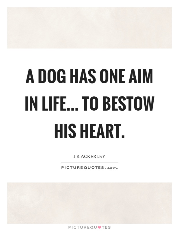 A dog has one aim in life... to bestow his heart Picture Quote #1