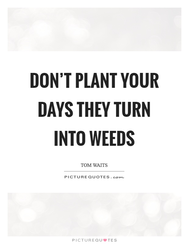 Don't plant your days they turn into weeds Picture Quote #1