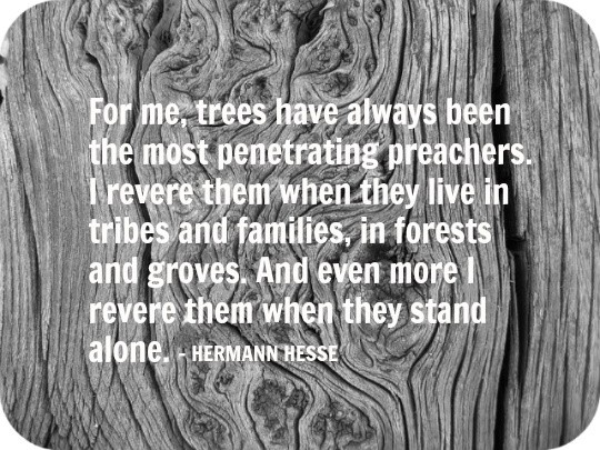 Hermann Hesse Quote Quote Number 595228 Picture Quotes