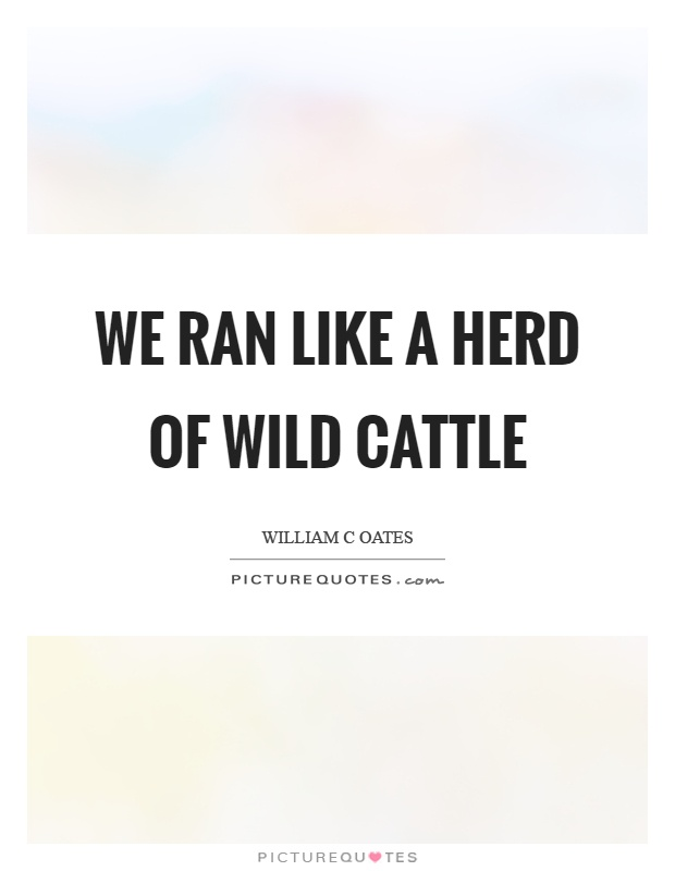 We ran like a herd of wild cattle Picture Quote #1