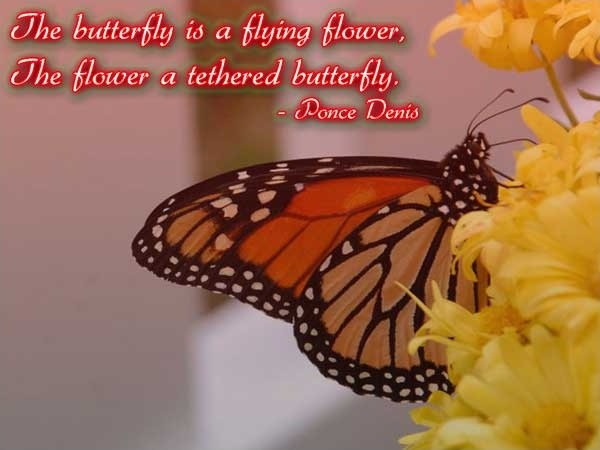 Butterfly Quote 1 Picture Quote #1
