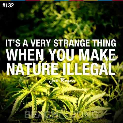 Funny Stoner Quote 1 Picture Quote #1