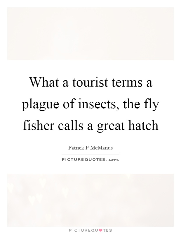 What a tourist terms a plague of insects, the fly fisher calls a great hatch Picture Quote #1