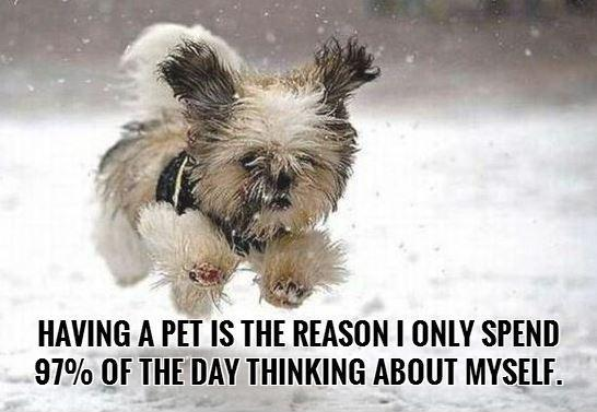 Having a pet is the reason I only spend 97 percent of the day thinking about myself Picture Quote #1
