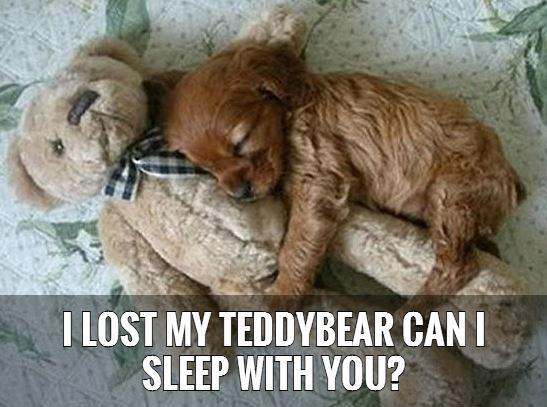 I lost my teddybear can I sleep with you?   Picture Quote #1