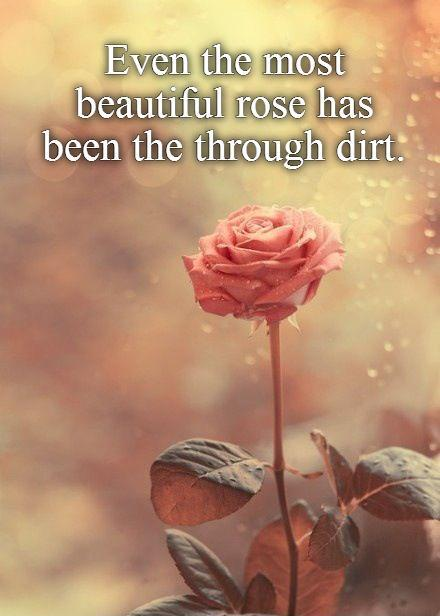 Even the most  beautiful rose has  been the through dirt Picture Quote #1