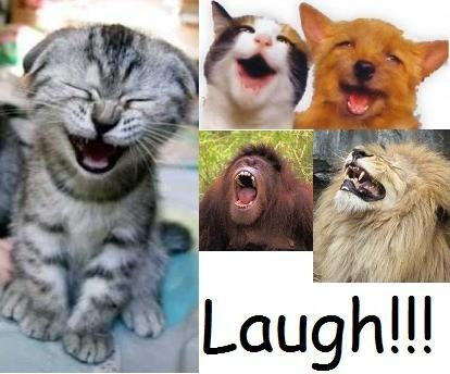 Make Them Laugh Quote 1 Picture Quote #1