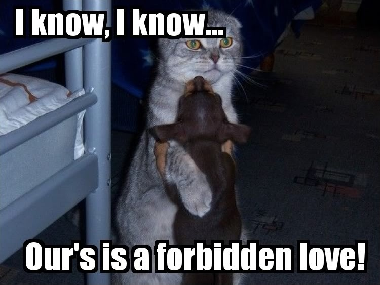 Funny Quotes About Forbidden Love : Forbidden Love Quotes & Sayings Forbidden Love Picture Quotes