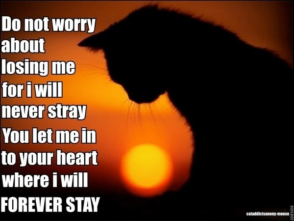 Cat Grieving Quote 1 Picture Quote #1