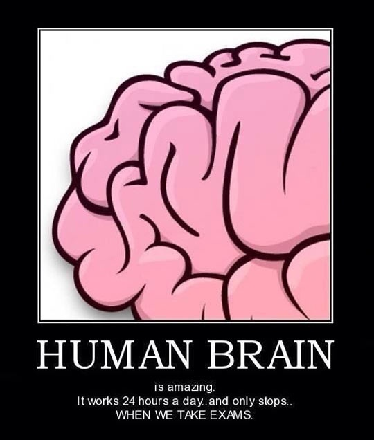 The Human Brain Quote 2 Picture Quote #1