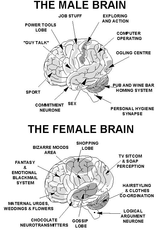 Brain Quote 1 Picture Quote #1