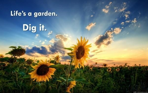 Garden Quote About Life 1 Picture Quote #1