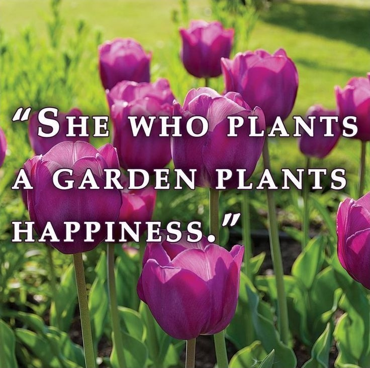 Beautiful Garden Quote 1 Picture Quote #1