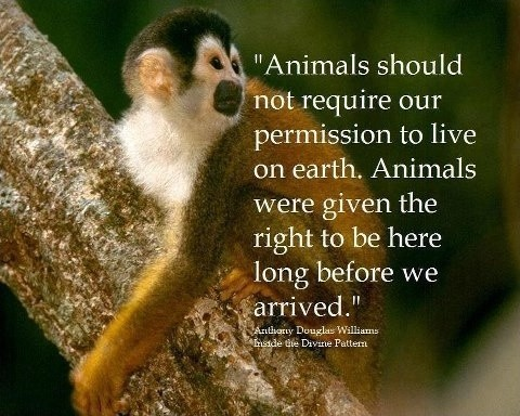 Animal Equality Quote 4 Picture Quote #1