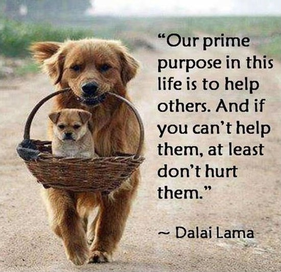 http://img.picturequotes.com/2/609/608443/helping-others-quote-3-picture-quote-1.jpg