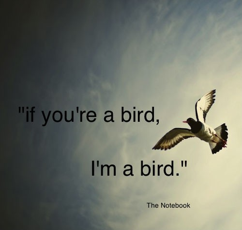 Quotes About Birds | Bird Quotes Bird Sayings Bird Picture Quotes
