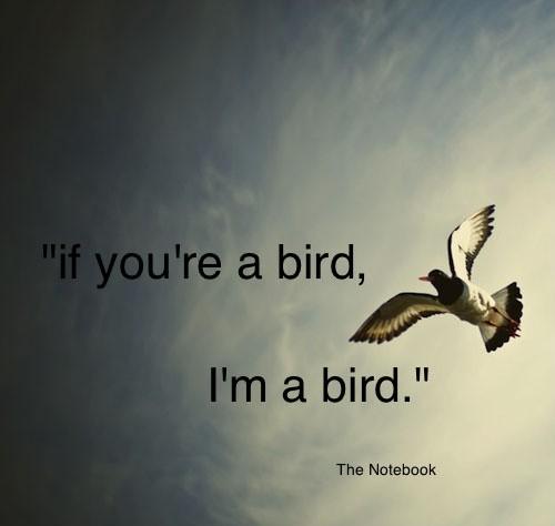 Birds Quotes Prepossessing Bird Quotes  Bird Sayings  Bird Picture Quotes