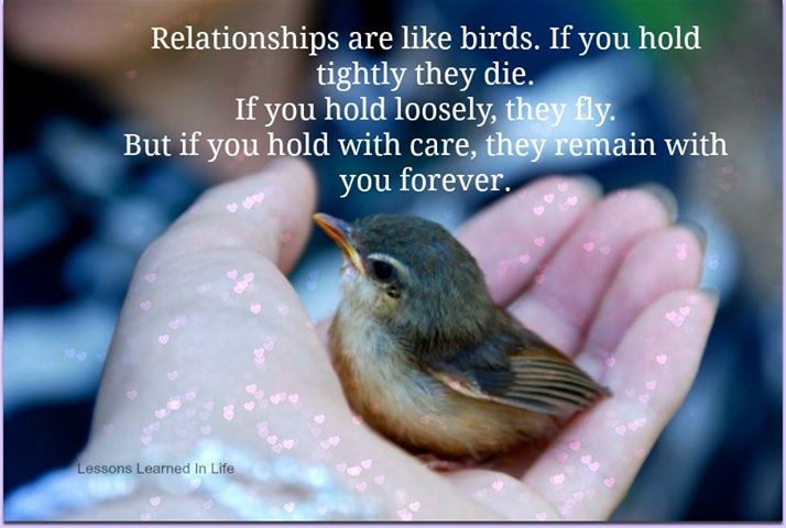 Birds Quotes Beauteous Birds Quotes  Birds Sayings  Birds Picture Quotes