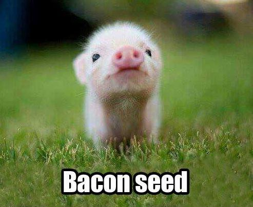 Bacon seed Picture Quote #1