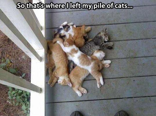 So that's where I left my pile of cats Picture Quote #1