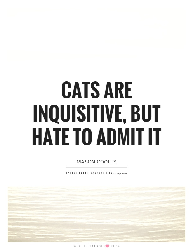 Cats are inquisitive, but hate to admit it Picture Quote #1