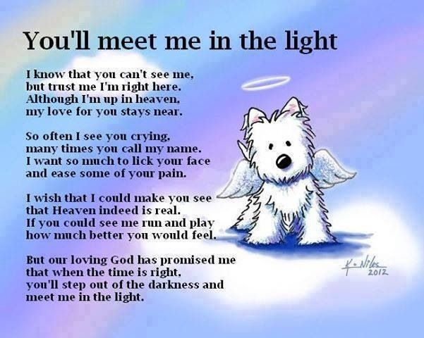 Pet Bereavement Quote 1 Picture Quote #1