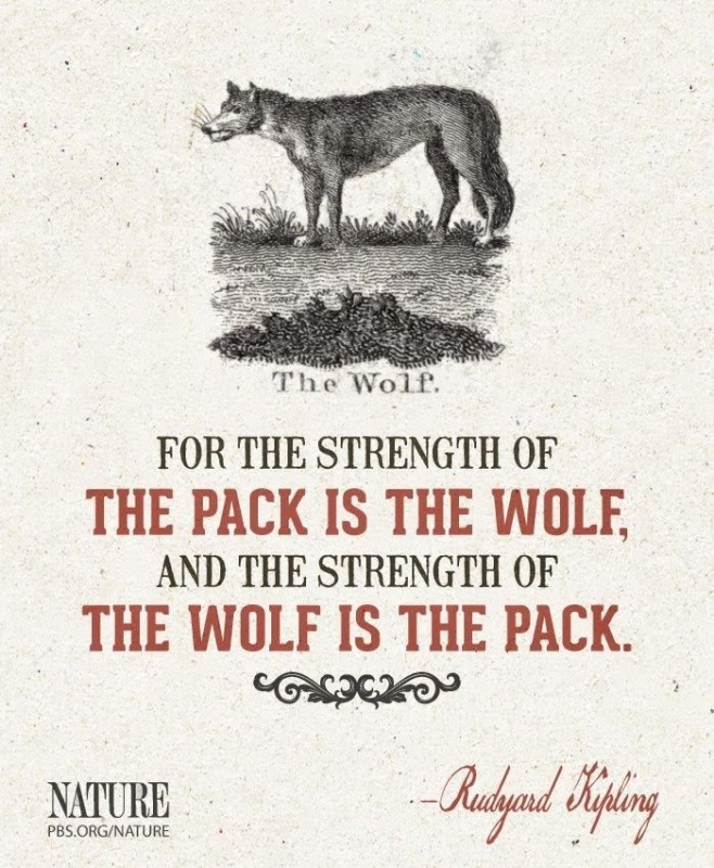 Wolf Quote 1 Picture Quote #1