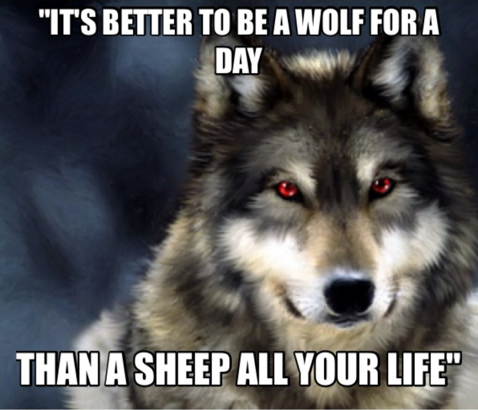 Wolf Quote 3 Picture Quote #1