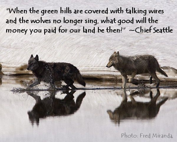 Wolf Quote 5 Picture Quote #1