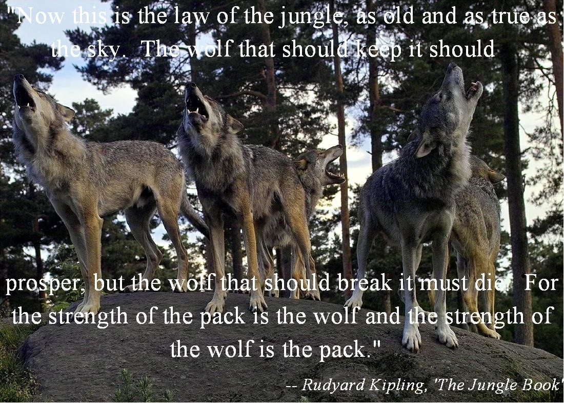Jungle Book Quotes Wolf Quote  Quote Number 610554  Picture Quotes