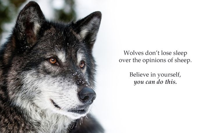Image result for encouraging wolf quotes