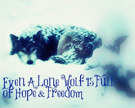 Lone Wolf Quote | Quote Number 610557 | Picture Quotes