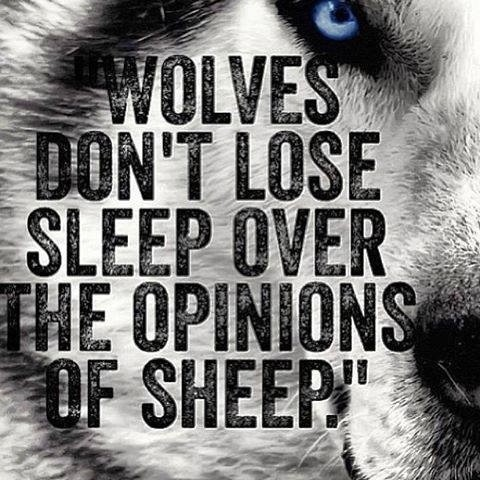 Wolf Quote 12 Picture Quote #1