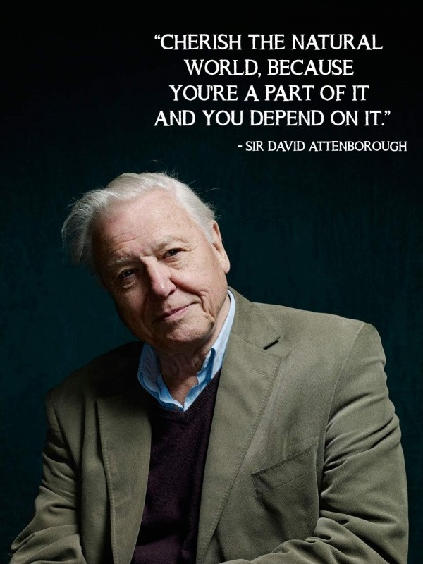 David Attenborough Environment Quote 1 Picture Quote #1