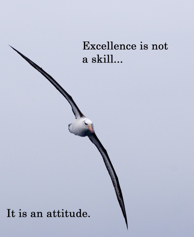 Excellence Quote 1 Picture Quote #1