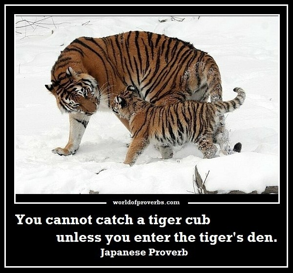 Famous Tiger Quote 3 Picture Quote #1