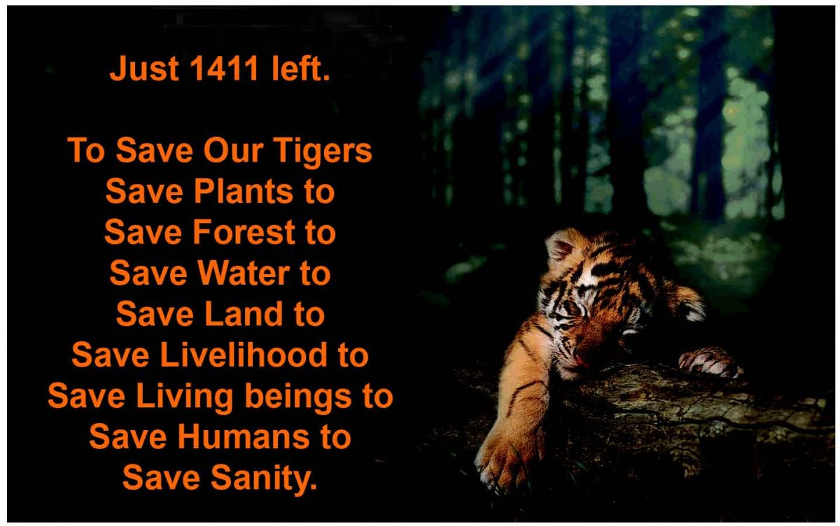 Save Tiger Quote 1 Picture Quote #1