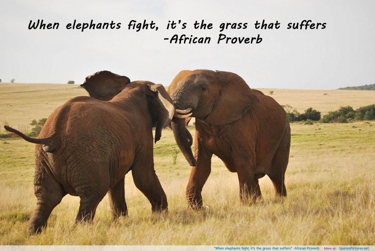 Elephant Quote 1 Picture Quote #1