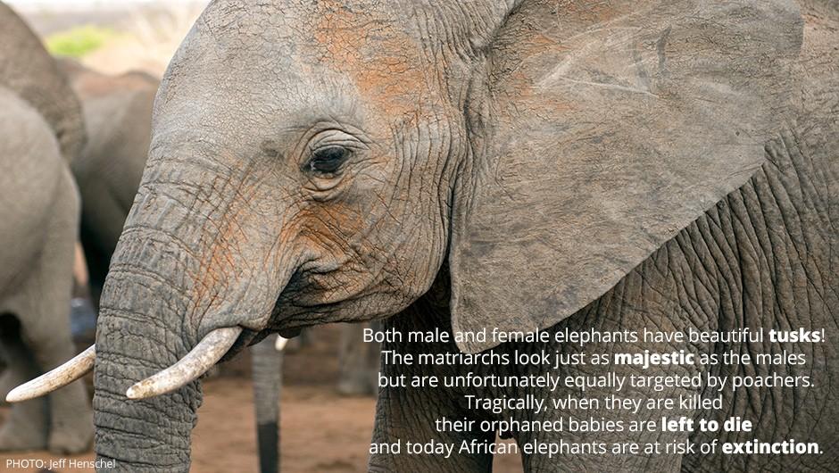 Elephant Quote 4 Picture Quote #1