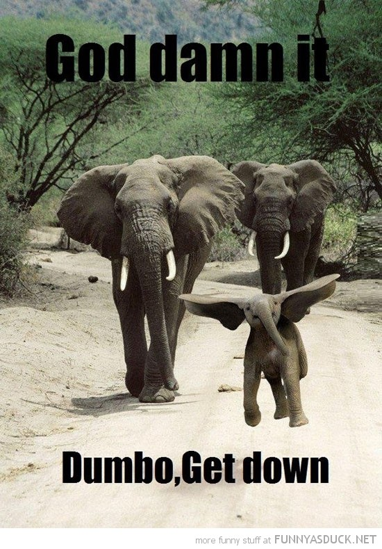 Baby Elephant Quote 1 Picture Quote #1