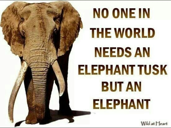Elephant Quotes Beauteous Elephant Quotes Elephant Sayings Elephant Picture Quotes
