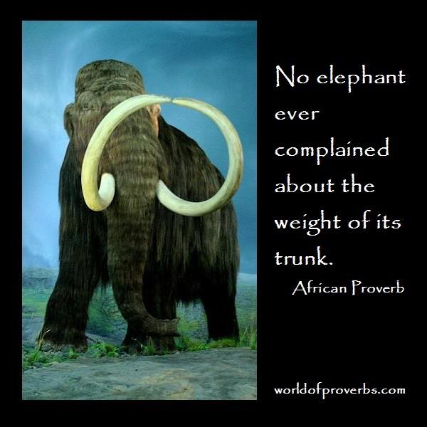 Elephant Quote 6 Picture Quote #1