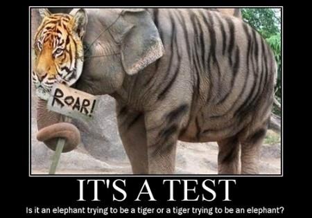 Elephant Quote 7 Picture Quote #1