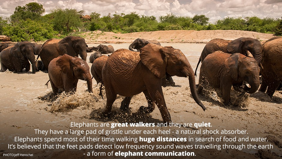 Elephant Quote 9 Picture Quote #1