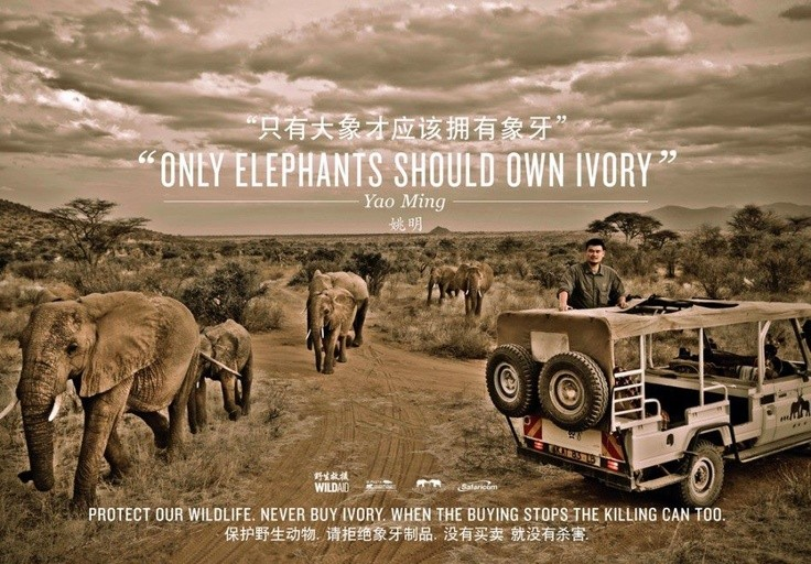 Elephant Quote 10 Picture Quote #1