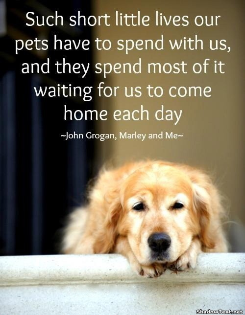 Marley And Me Quote 5 Picture Quote #1
