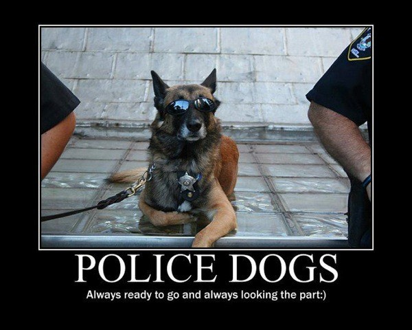Police Quote 3 Picture Quote #1