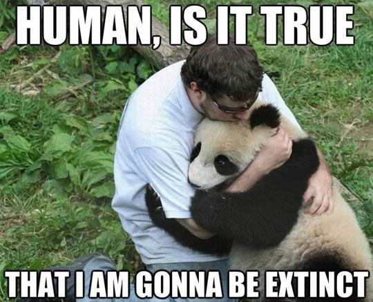 Human, is it true that I am gonna be extinct Picture Quote #1