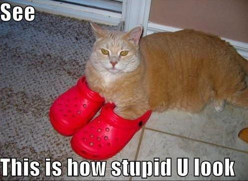 See - this is how stupid you look Picture Quote #1
